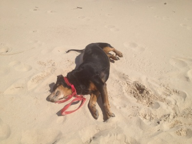 Working technology makes us happy; sandy beaches make Leroy happy.